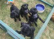 Hermosas perritos del barro amasado