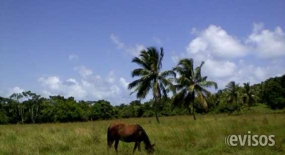 Fotos de Vendo terrenos ganadero,  turístico, hotelero sabana de la mar 6